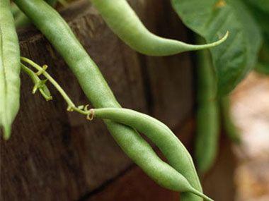 Indoor Vegetable Gardening Tips 9 vegetables to grow indoors veggies gardens and plants 9 veggies to grow indoors workwithnaturefo