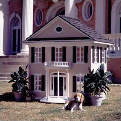 I'm sure peanut would love this doggie mansion.