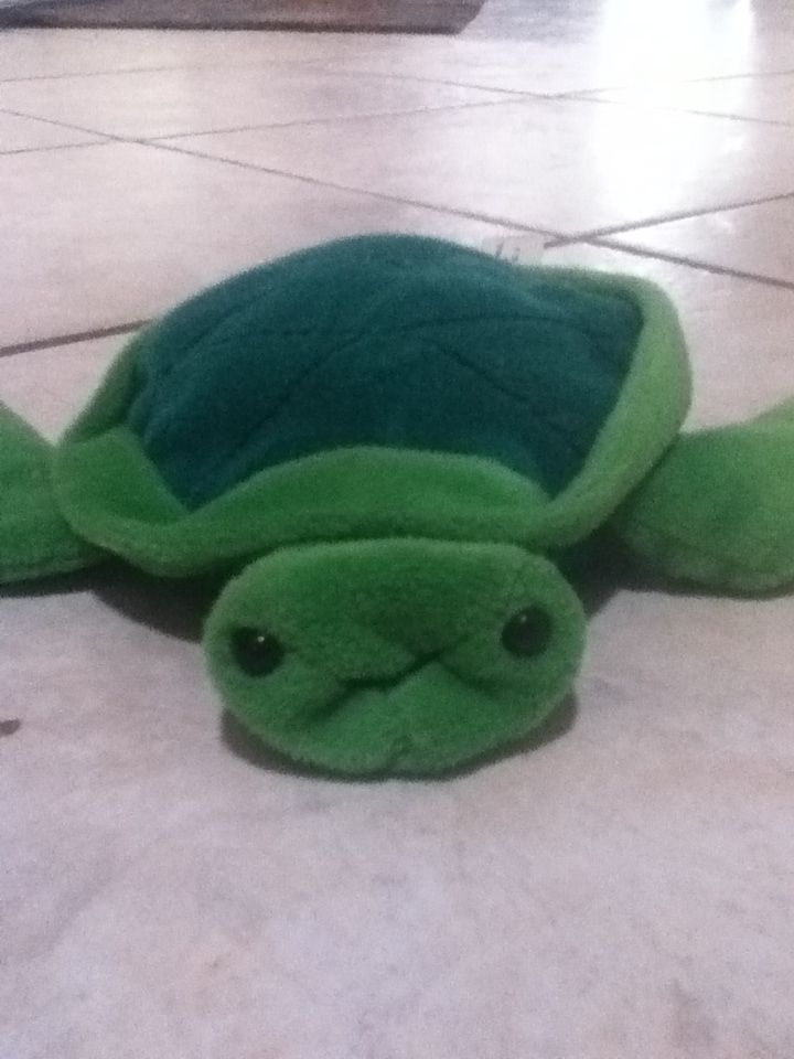 Such a cute little turtle!!!