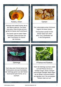 Der Herbst naht | Lehrmittel Perlen | Pinterest | Lebenszyklen ...