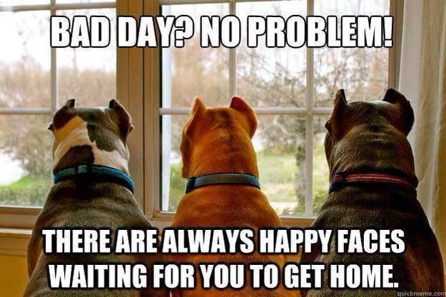 (': that is absolutely right! Three adorable happy pitty faces!