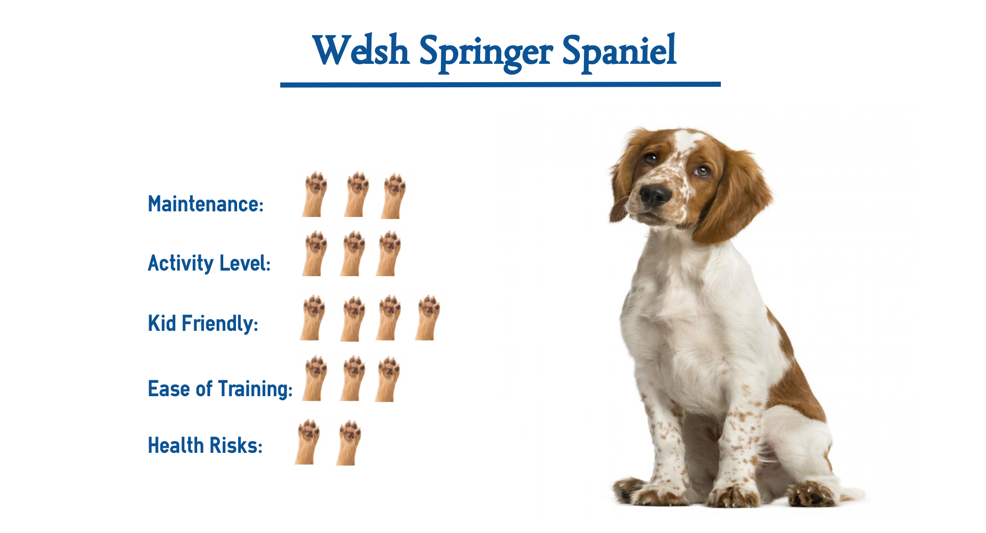 Welsh Springer Spaniel Dog Breed Everything You Need To Know At A Glance Welsh Springer Spaniel Spaniel Dog Spaniel