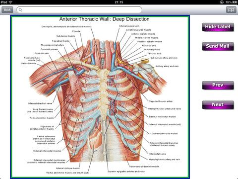 Anatomy Back Thorax And Spinal Cord Ipad Apps Games On