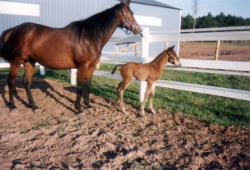 Horse and Baby in Flex