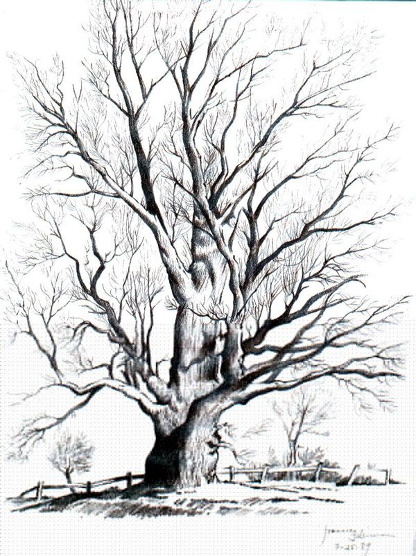 Tree pencil art downward pathway pencil