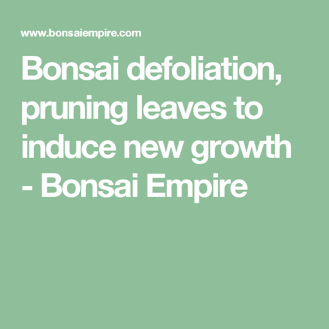 Bonsai defoliation, pruning leaves to induce new growth - Bonsai Empire
