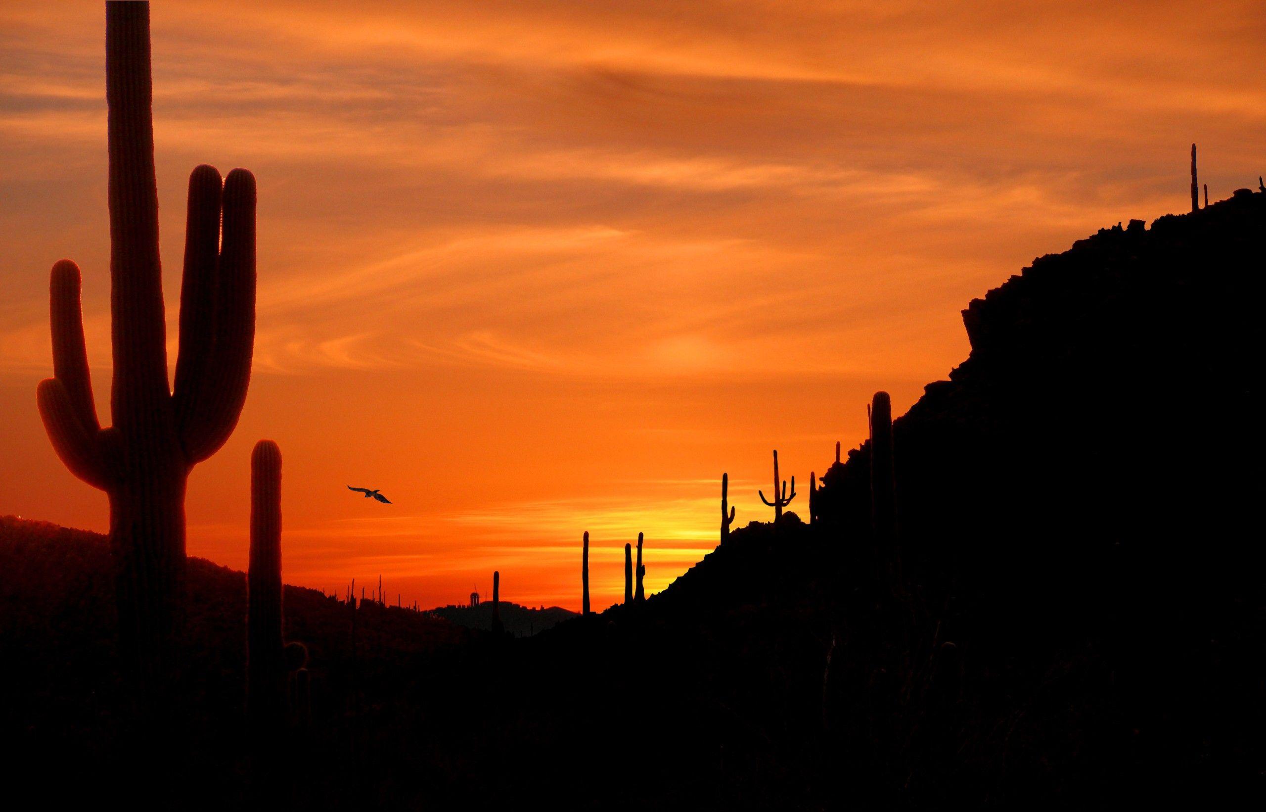 Cactus Sunset Background Wallpaper Desert Sunset Art Desert Sunset Sunset Hd wallpaper cacti evening sunset desert