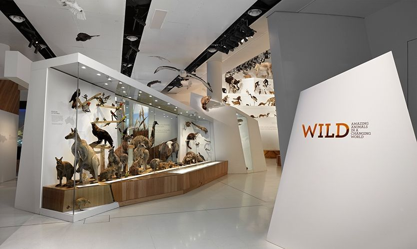 Resultado de imagen de wild melbourne museum photos