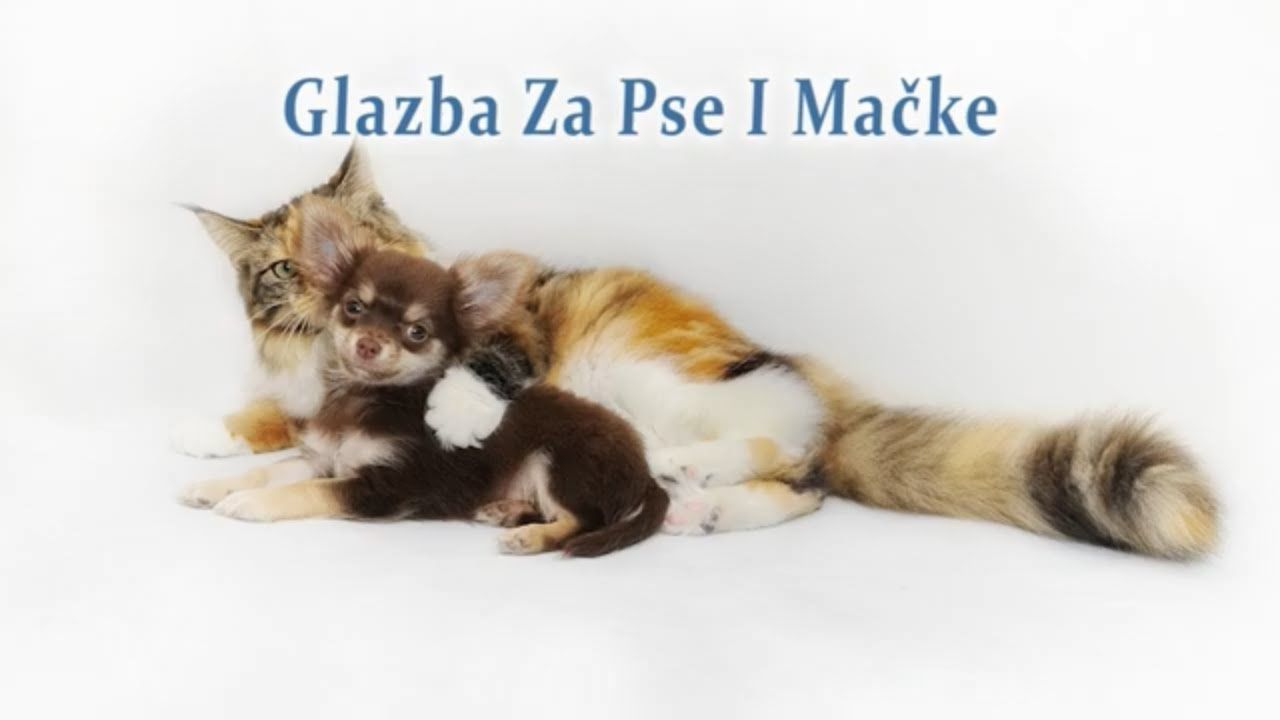 Glazba Za Pse I Macke Koja Ih Opusta I Cini Sretnijima Https Youtube Com Watch V C4a5mehron0 Glazbazapseimacke Glazbazapse With Images Cats Pets Cat Care