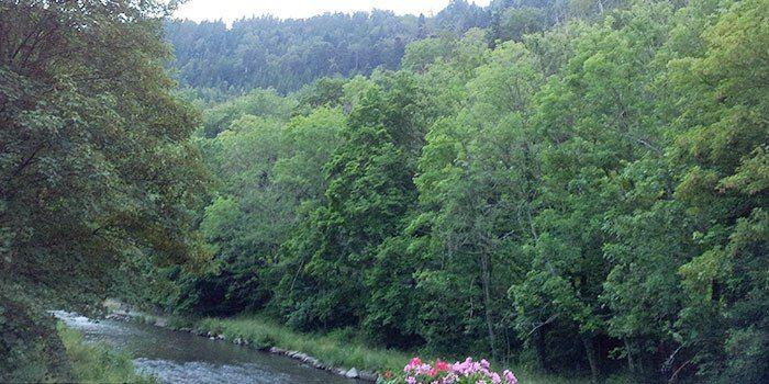 calw-selva-negra-naturaleza-alemania
