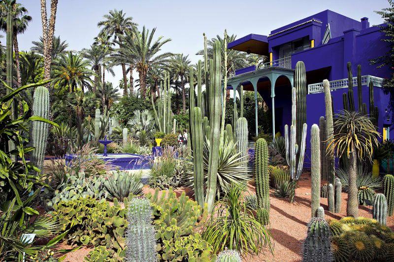 Kakteen In Haus Und Garten Haus Und Garten Garten Kaktus