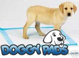 Doggypads Com Unbeatable Prices Labrador Retriever Labrador Dogs