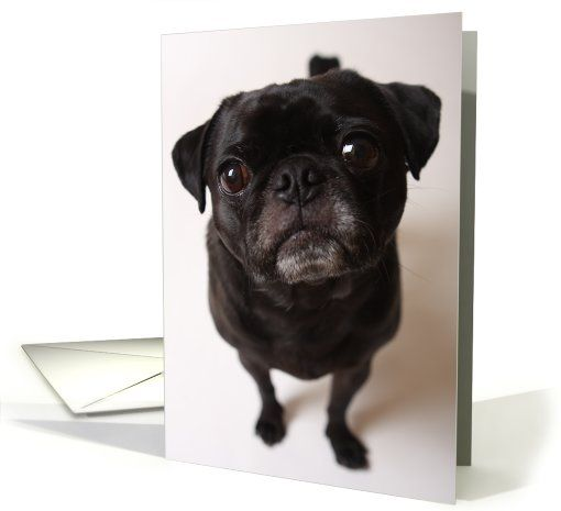 Animals Pets Card Dog Black Pug With Big Head Greeting Card