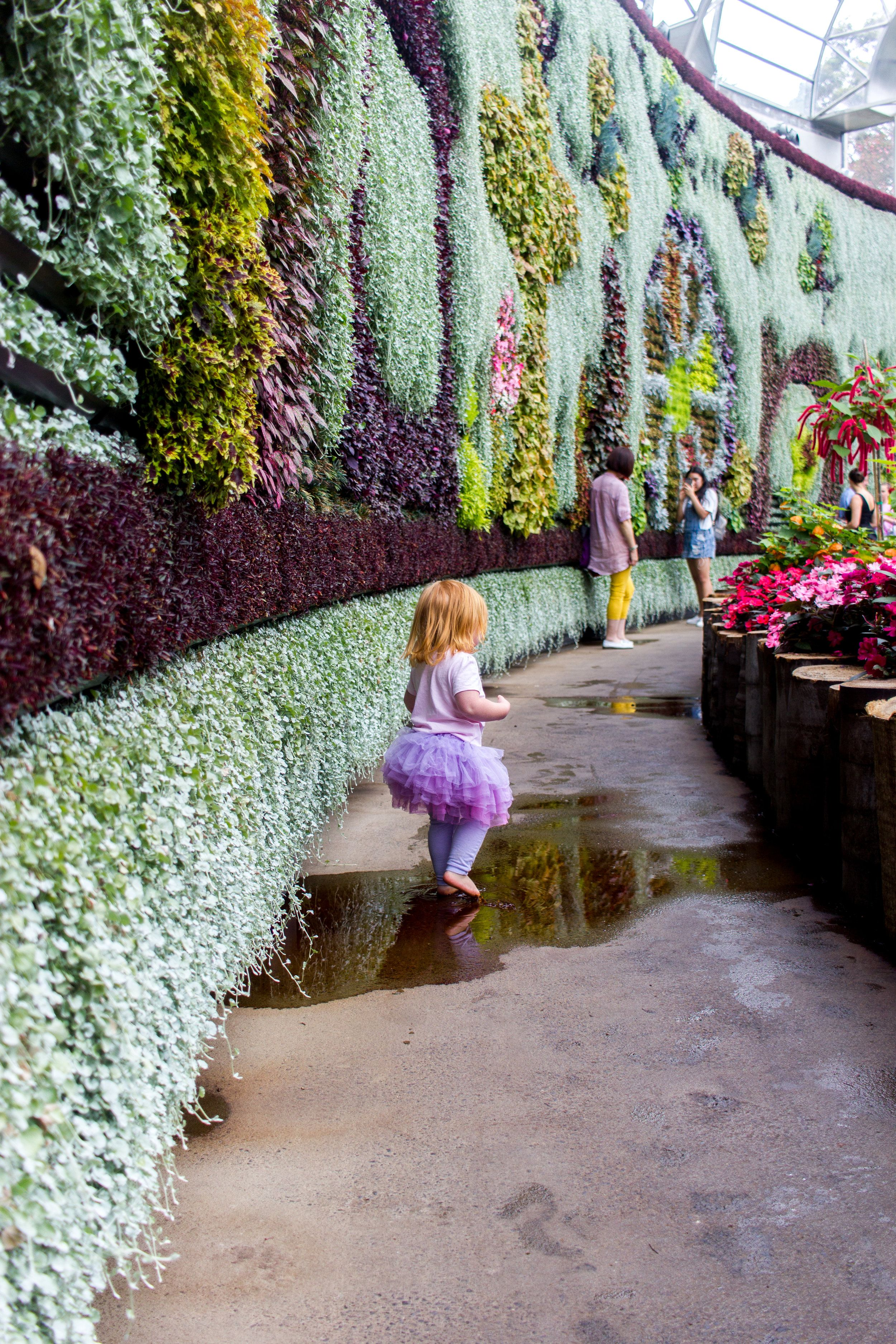 What To Do In Royal Botanic Gardens Sydney