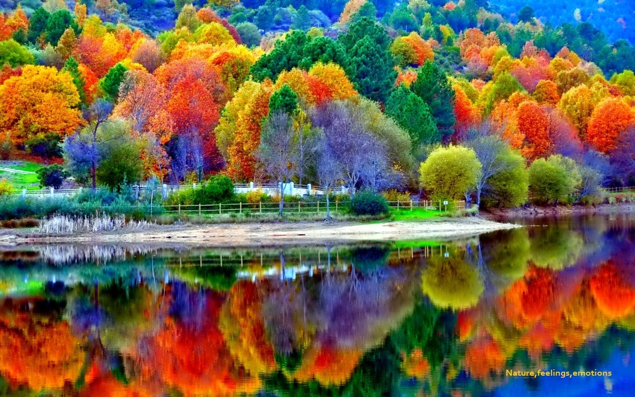 Reflections of the fall of the