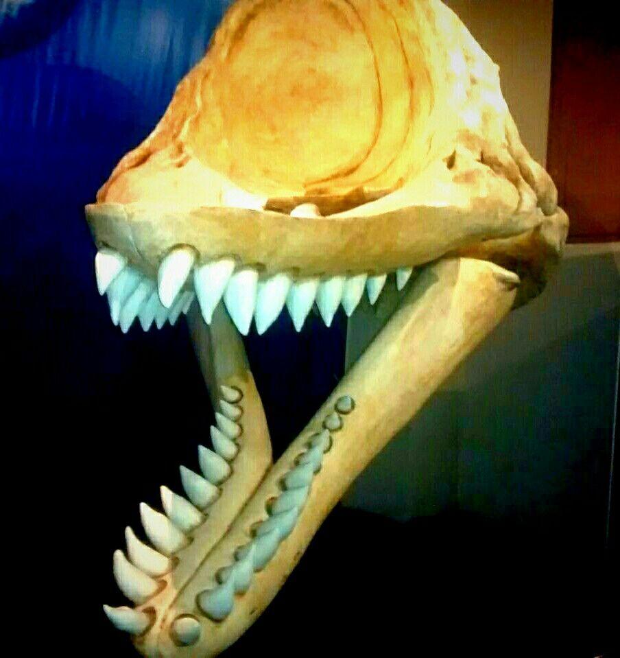 Cráneo conservado de tiburón prehistórico | galeria craneal ...