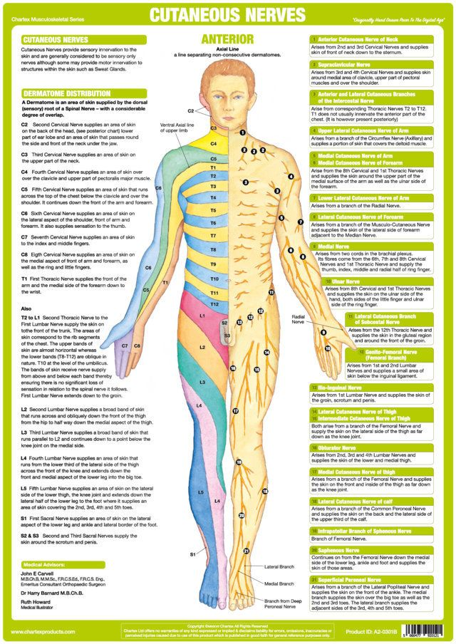 the chartex cutaneous nerves chart illustrates explains and rh pinterest com