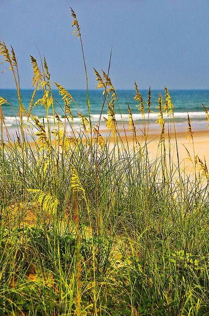 Sea Oats For Lynn 6 Beach Scenes Scenery Beautiful Beaches