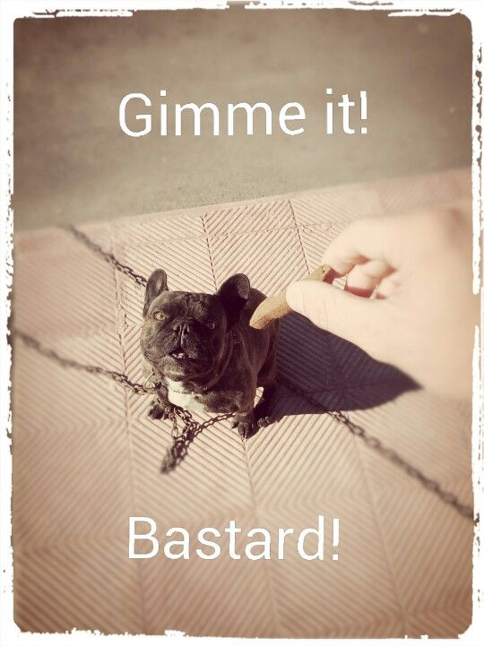 Gimme it! #funny #funnypic #epic