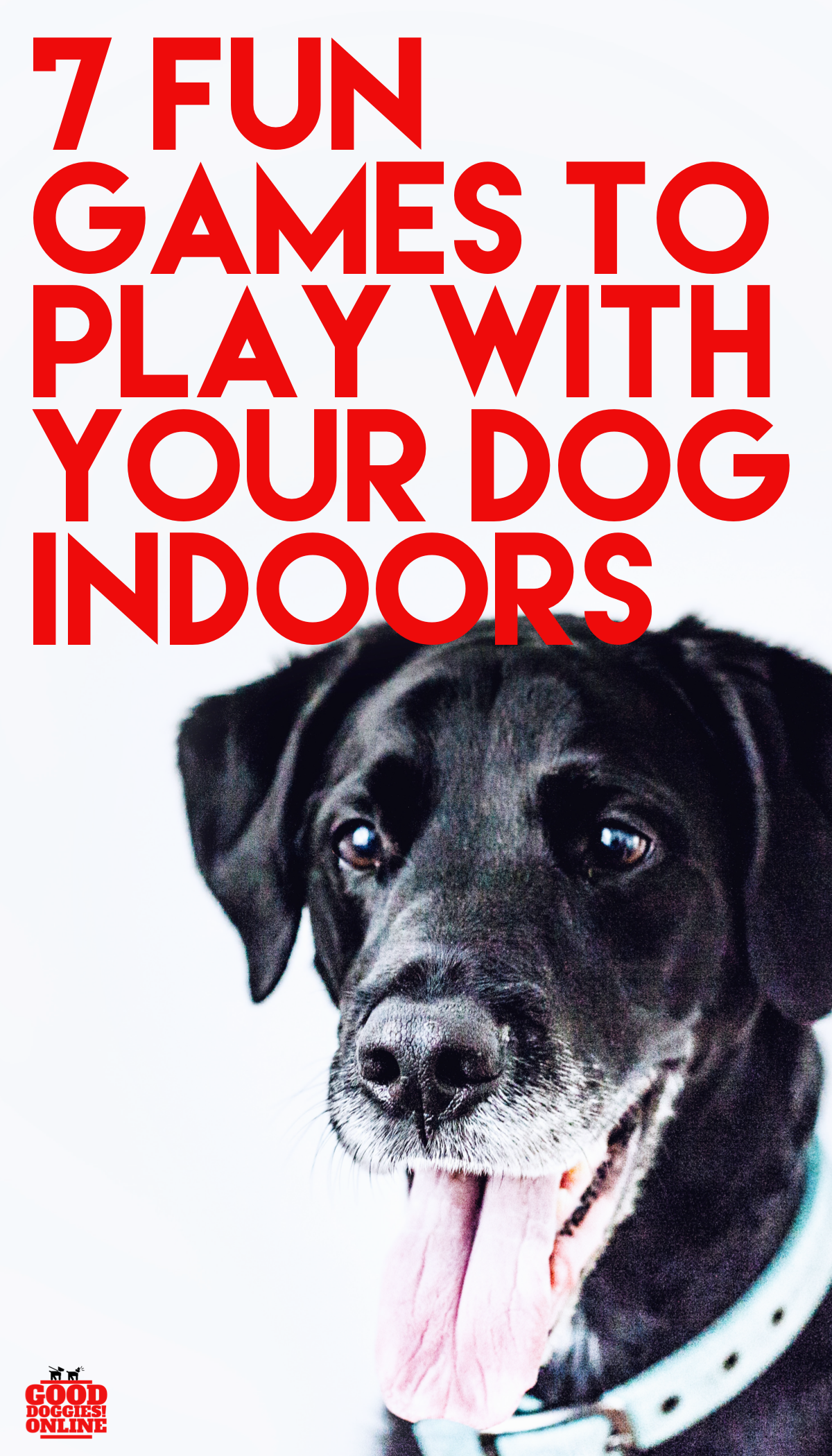 Seven Fun Games to Play with Your Dog Indoors Dog games
