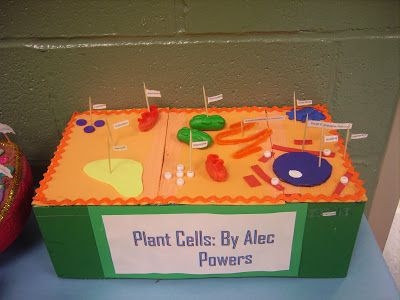 how to make a plant cell model using a shoebox