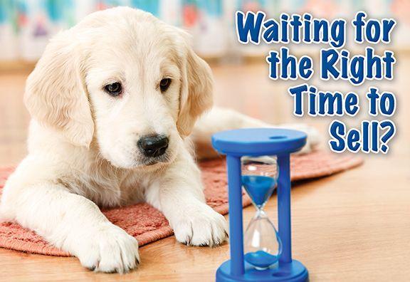 Neighborhood Marketing-Postcards: Waiting Dog