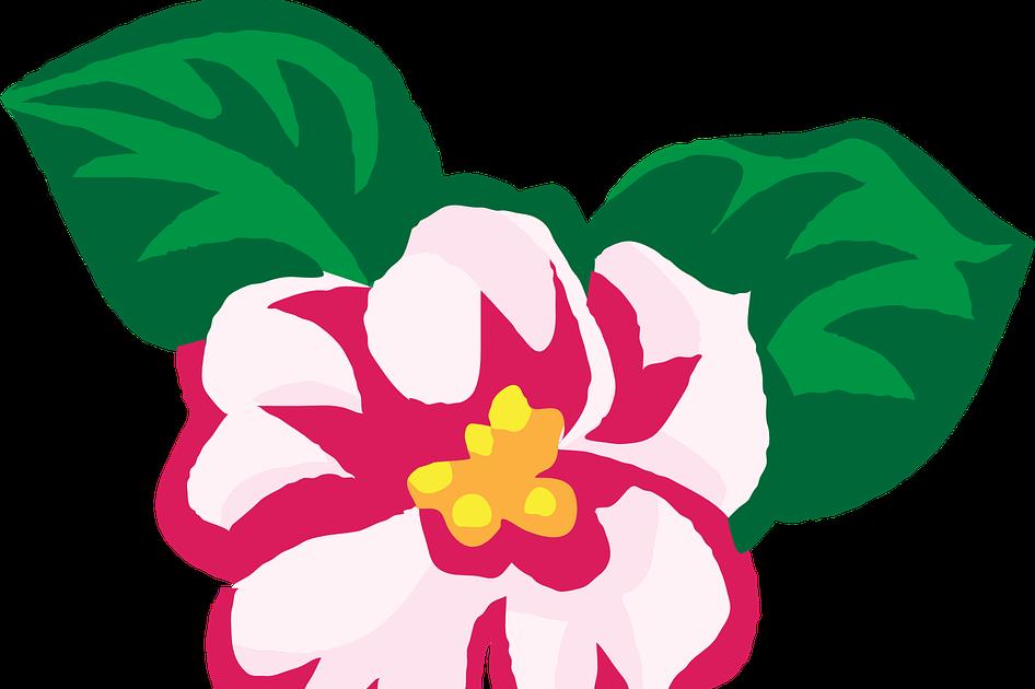 24 Gambar Hiasan Bunga Kartun Bunga Afrika Violet Daun Gambar Vektor Gratis Di Pixabay Download Wooden Projects Ob 1 Orname Di 2020 Kartun Ilustrasi Kartun Gambar