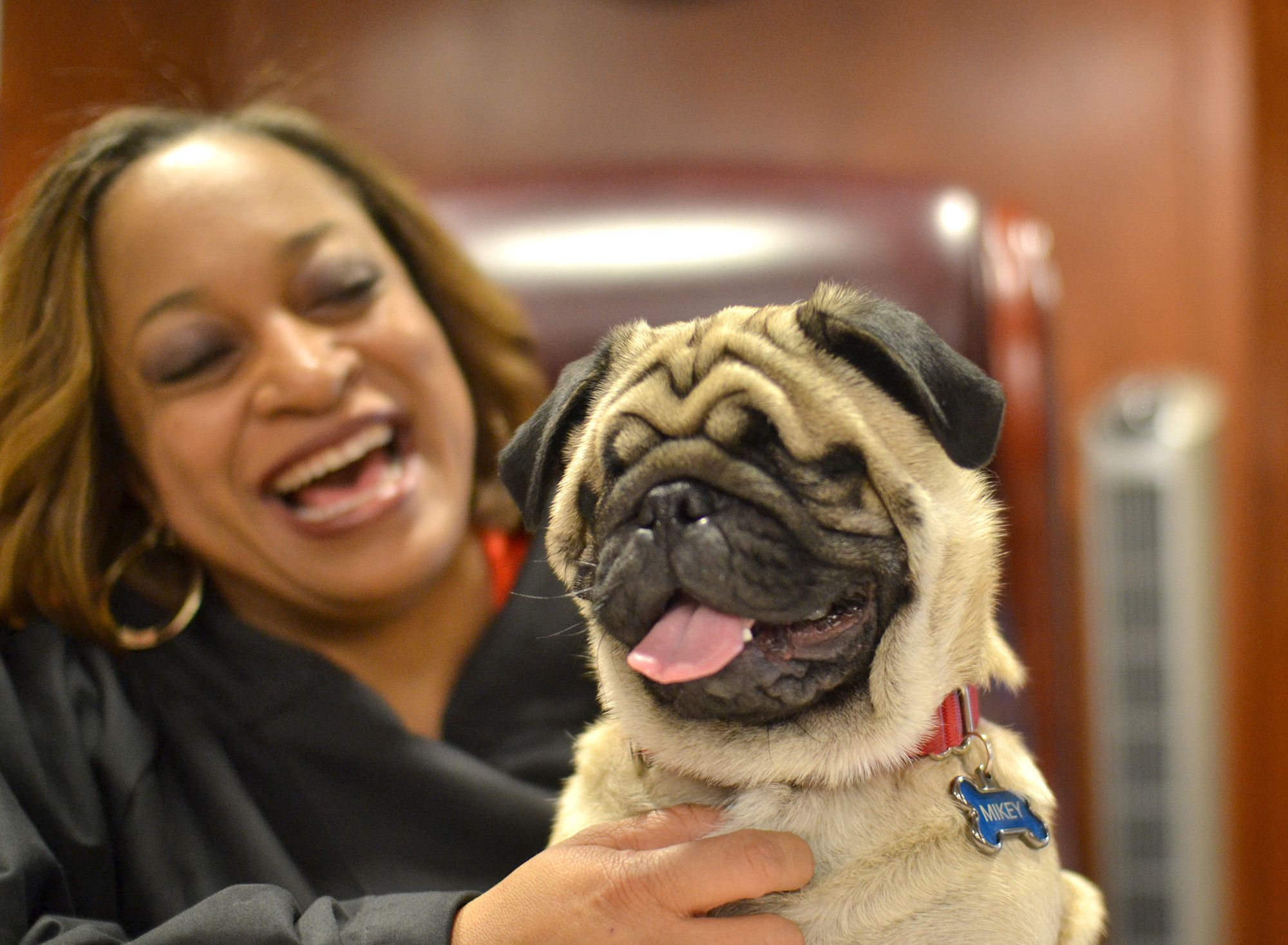 This Judge And Her Blind Rescue Pug Are Practically Inseparable