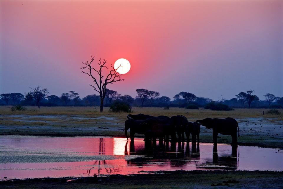 Zimbabwe Elephant Sunset by Shane Wolf — 2015 National Geographic Photo Contest