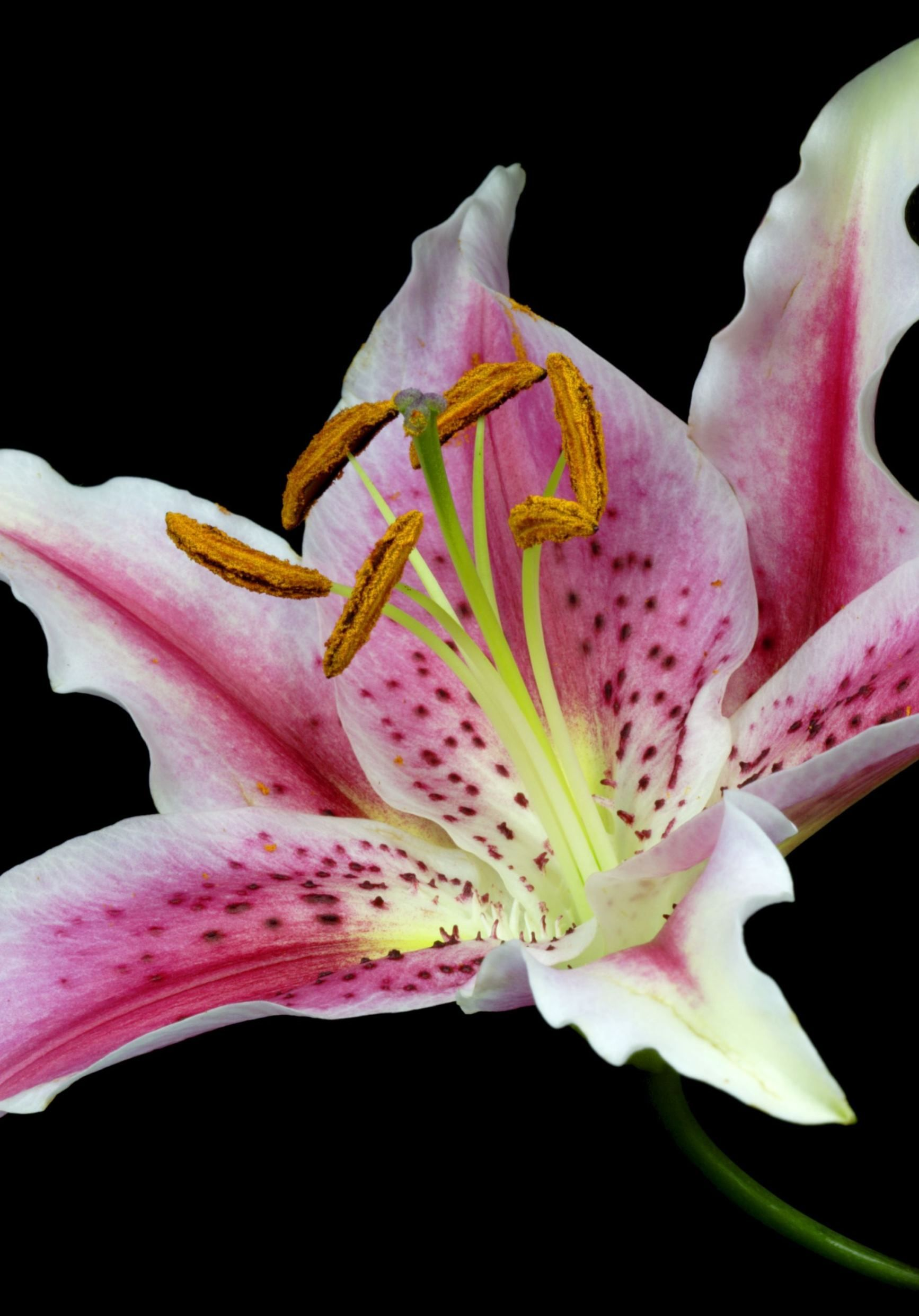 1843768df1 What Your Favorite Flower Says About You | Flowers | Flowers, Flower ...