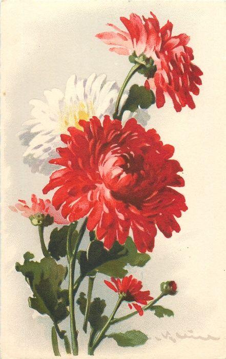 Red White Chrysanthemums Tuckdb Flower Painting Chrysanthemum Watercolor Floral Painting