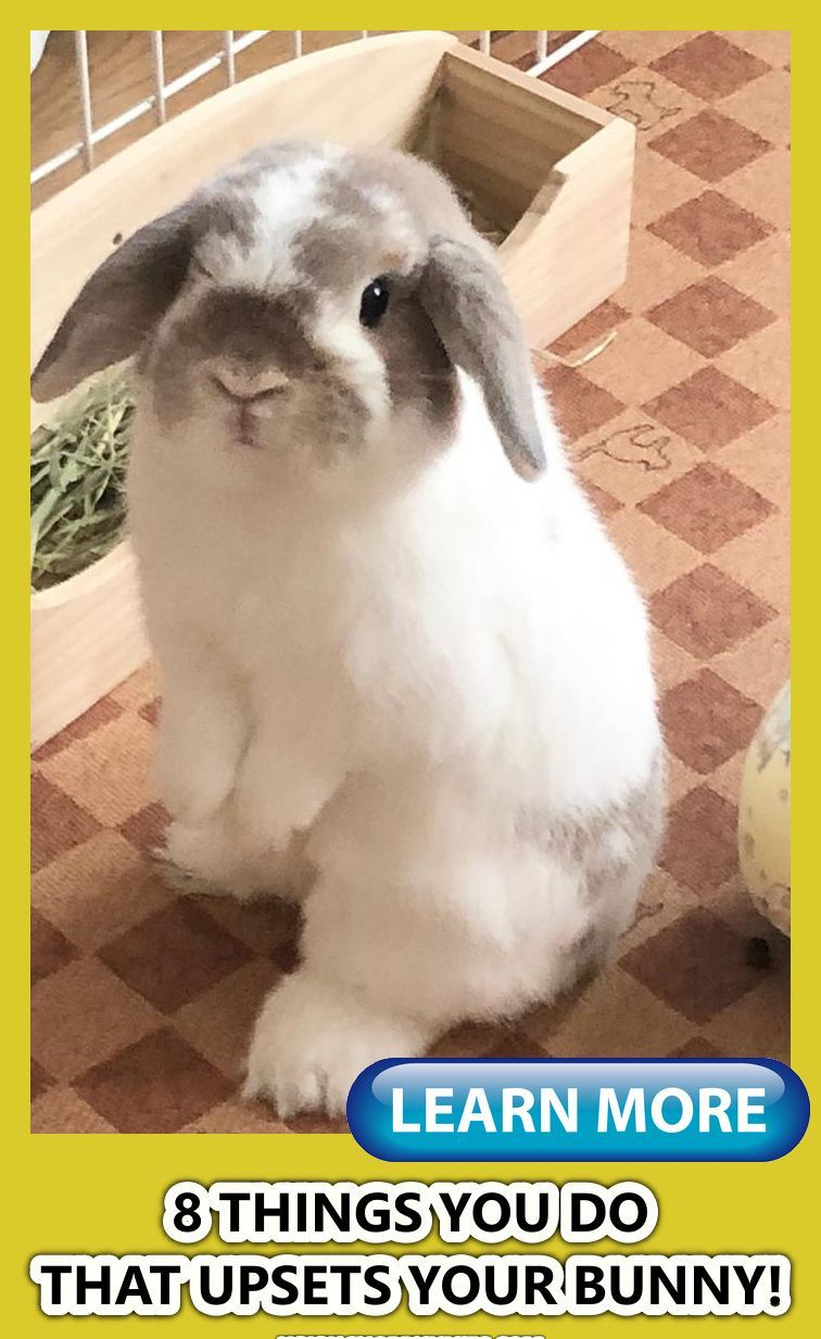 8 Things That Upset Rabbits And Bunnies Pet Rabbit Care Pet Rabbit Cute Baby Bunnies