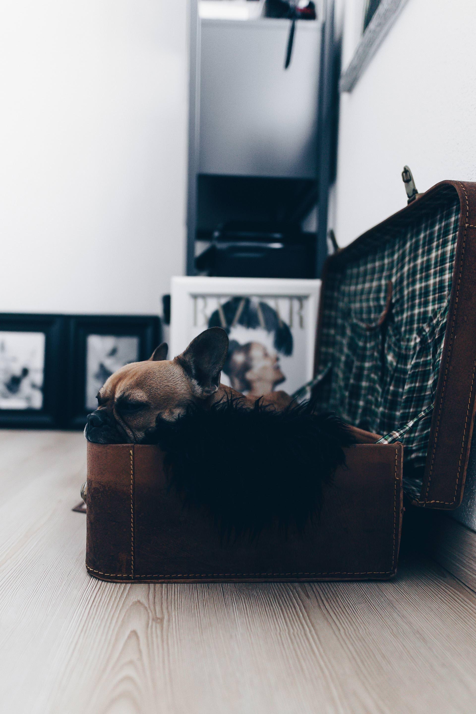 Berufstatig Mit Hund Vollzeit Arbeit Und Hund Hund Zur Arbeit Mitnehmen Hund Und Arbeit Miteinander Vereinen Hundeblog Karriere Blog Www Whoismocca C Hunde