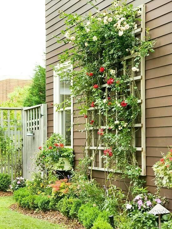 Climbing Vines Need To Attach Additional Trellis House And Plant More Climbers