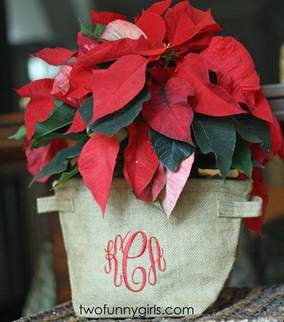 Personalized Jute Planter Cover for Christmas Poinsettias :: Two Funny Girls