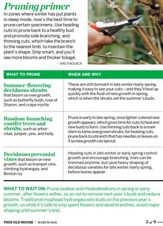 Pruning Prune Green Thumb Outdoor Garden