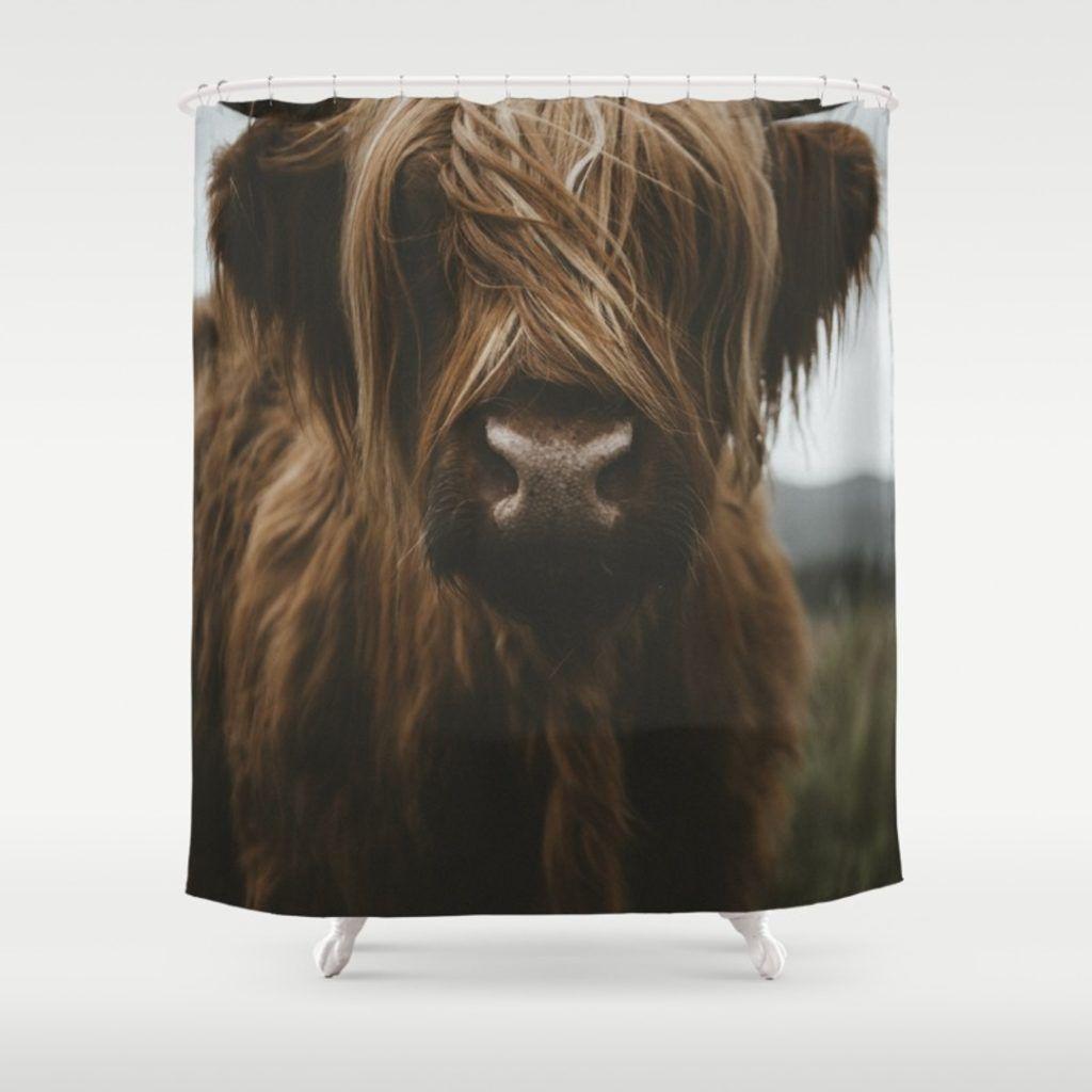 Longhorn Cattle Longhorn Cattle Cattle Scottish Highland Cow