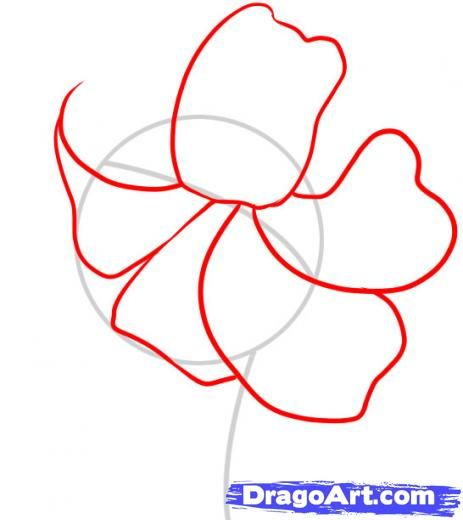 Diagram Of Tiger Lily - 16.9.kenmo-lp.de • on battery template, bracket diagram template, control diagram template, safety template, suspension template, body template, building diagram template, wire template, flow diagram template, networking diagram template, block diagram template, maintenance template, manual template, transformer template, security diagram template, kitchen diagram template, brochure template, lighting diagram template, roofing diagram template, engine template,