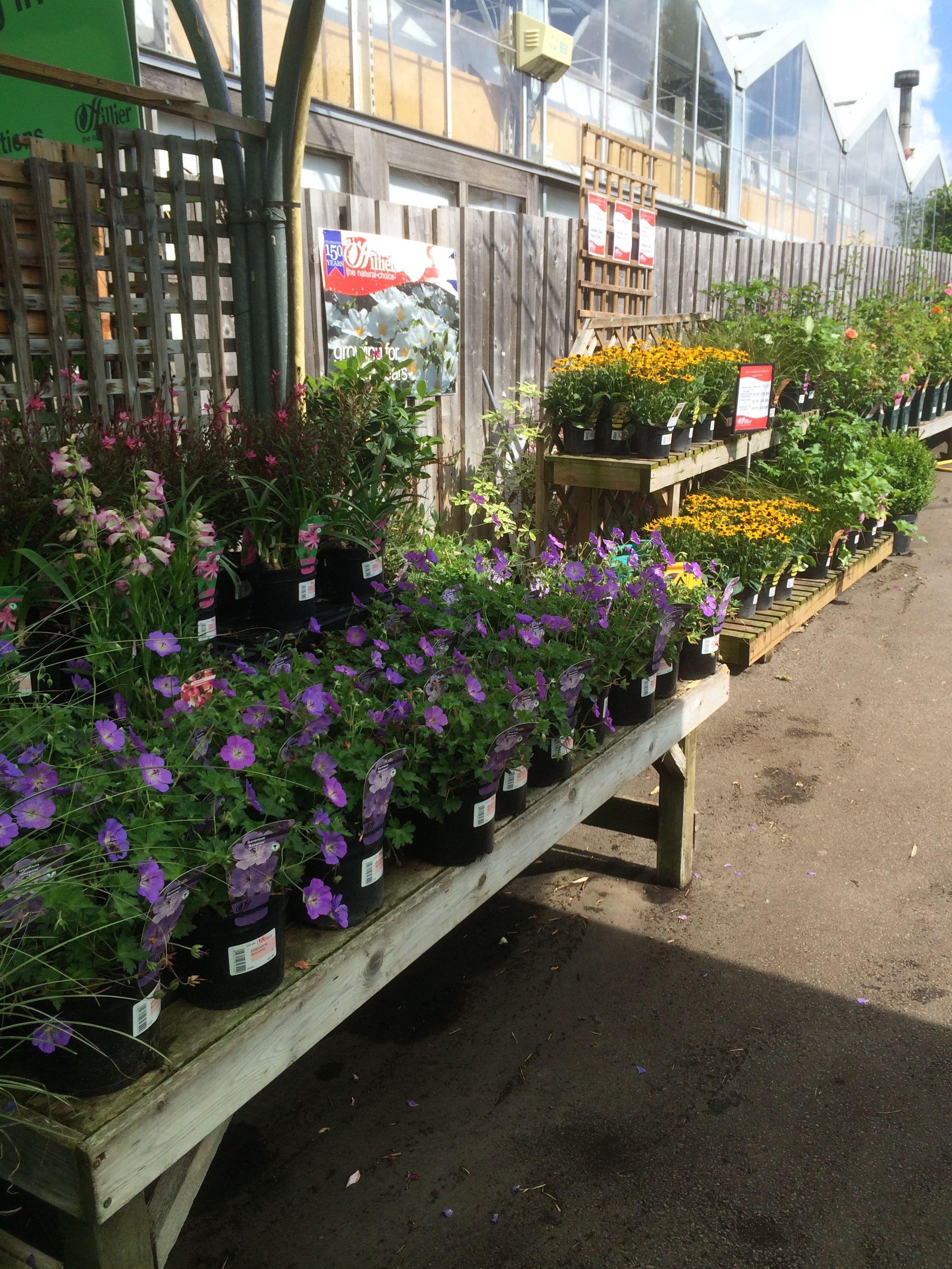 Pot Gardening Tips Garden Layout Container Gardening Plants