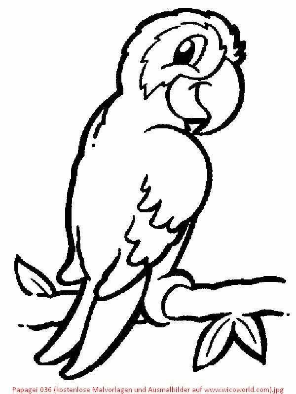 Papagei 036 (kostenlose Malvorlagen und Ausmalbilder auf