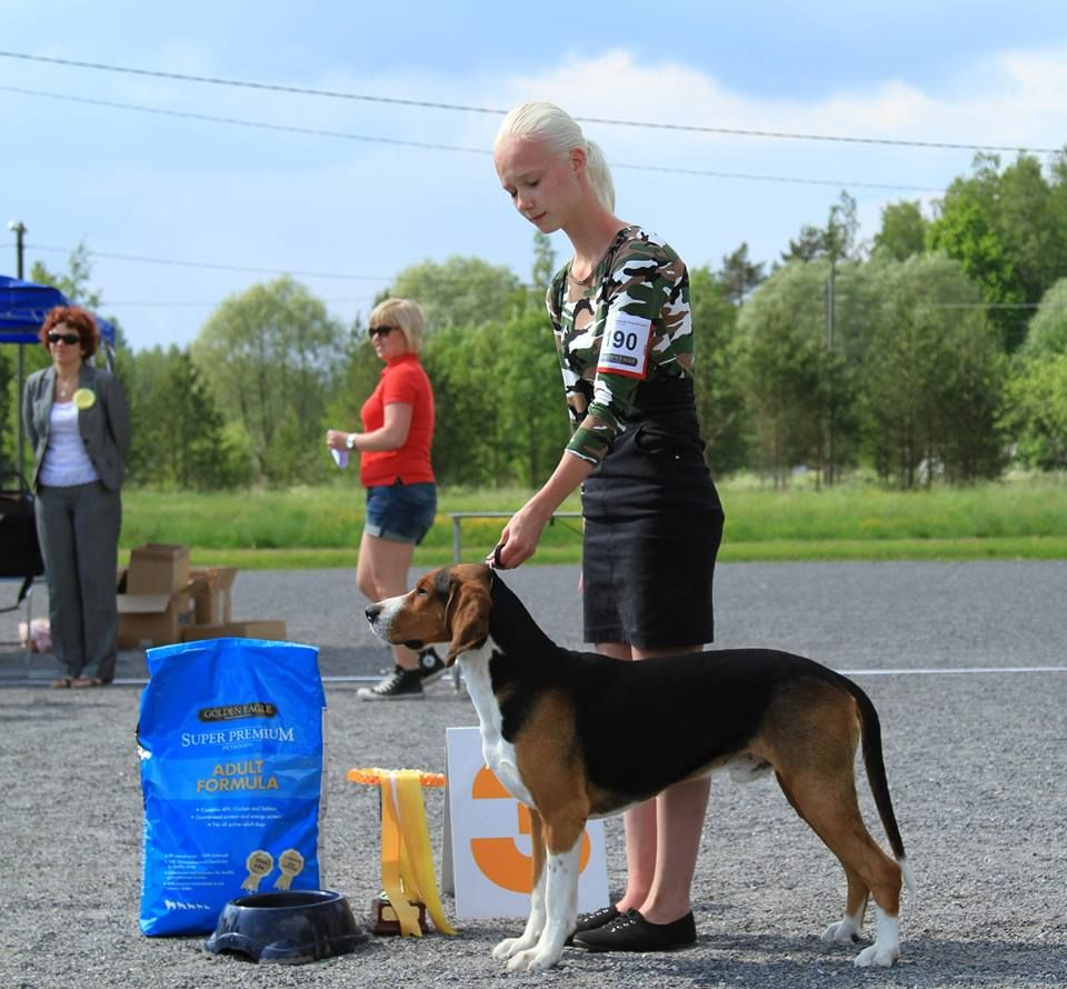 FCI group VI - Winners of the International Dog Show Pori (Finland), 1 - 2 August 2015