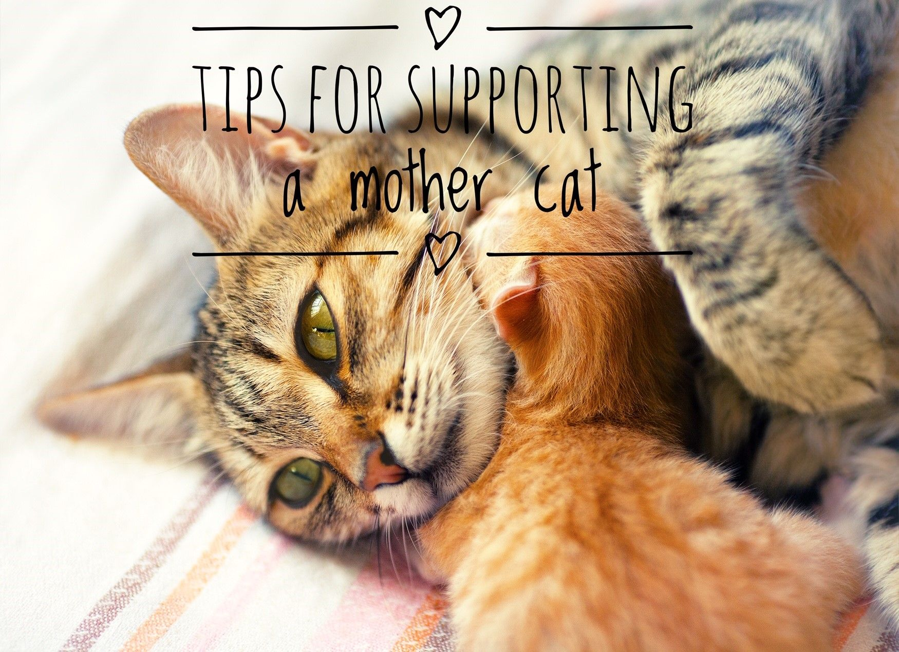 Tips For Supporting A Mother Cat Mother Cat Cats Kittens