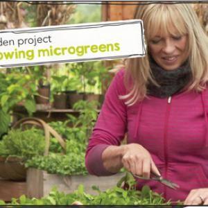 Tui Garden Project - Growing Microgreens