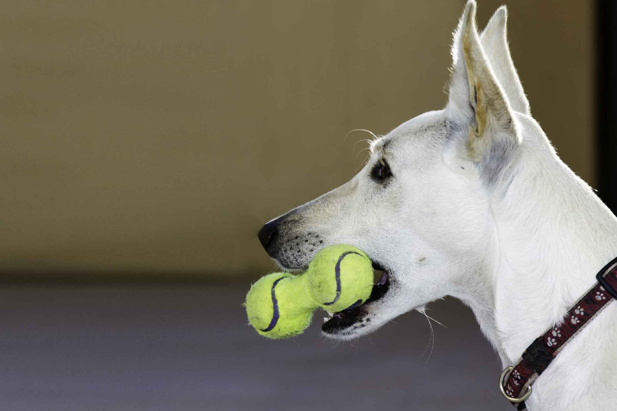 How To Train Your Dog To Pick Up Dropped Items Training Your Dog