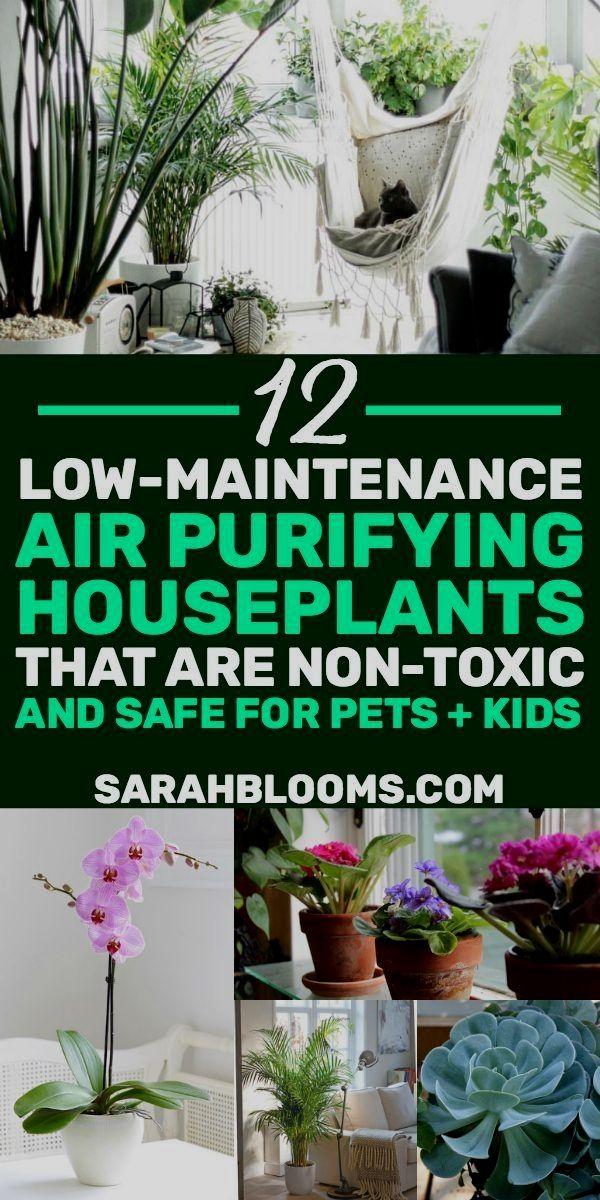 Pin by ewenrhbhv on Clean Everything in 2020 Plants, Air