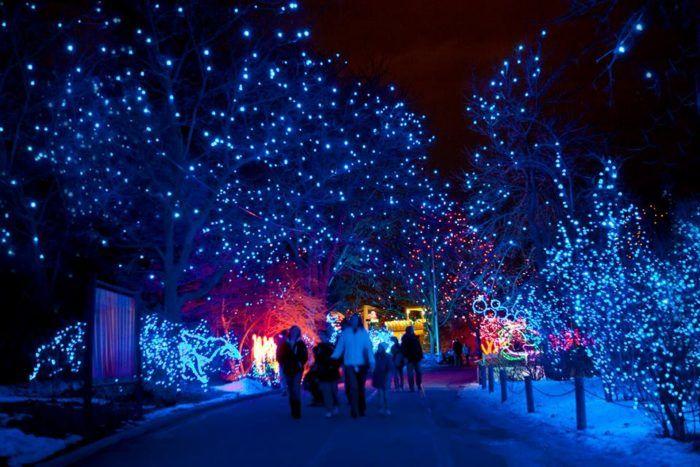 Magic Christmas Lights
