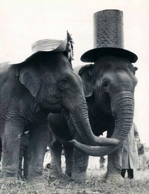 Elephant In Room That Needs To Be >> Wouldn T It Be Nice Lelephantes Elephant Animals Et Animals