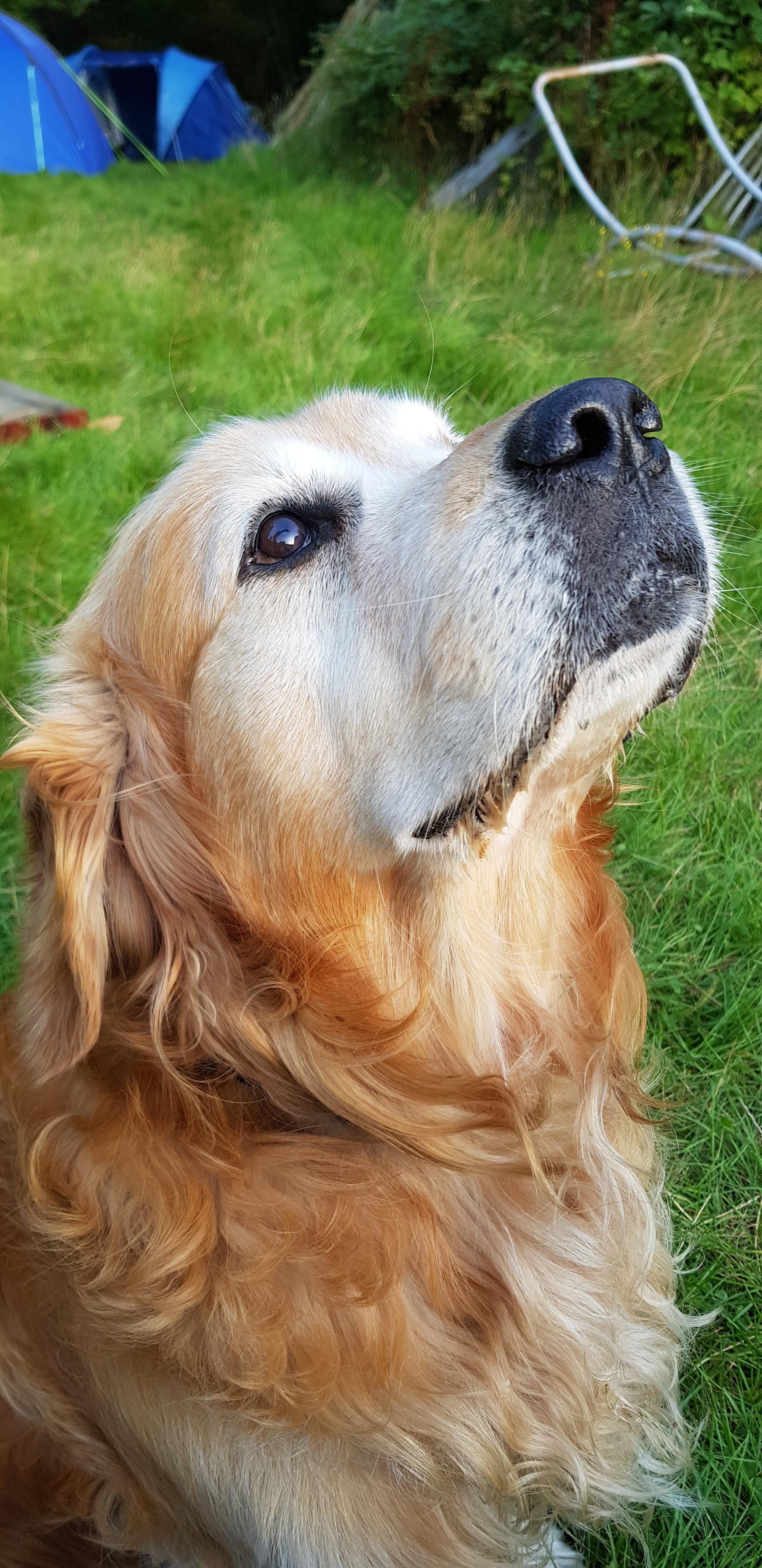 47 Adorable Golden Retriever Mix Breeds Doggypedia Golden Retriever Golden Retriever Mix Retriever