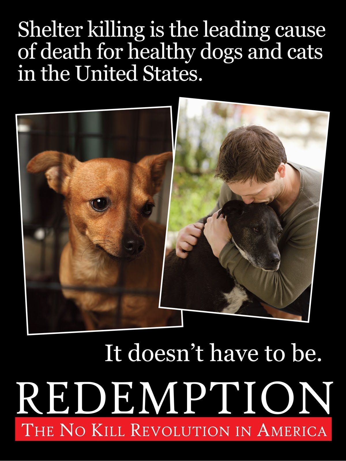 Redemption The No Kill Revolution In America Dog Cat Animal Advocacy Animal Shelter