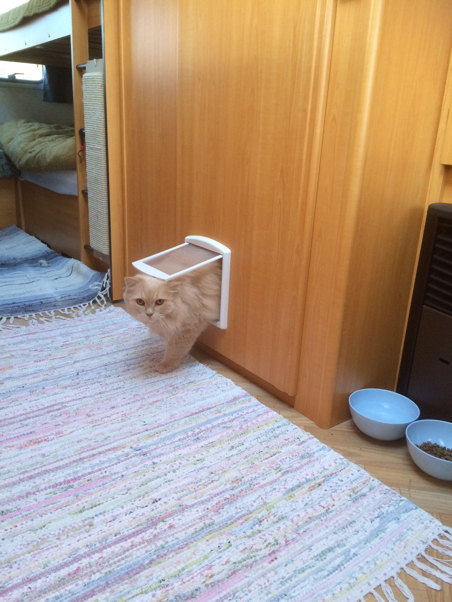 Cat door for toilet in my camper インテリア